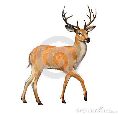 Free Beautiful Deer With Big Horns Royalty Free Stock Photos - 30637998