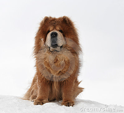 Beautiful dog on a snow hill