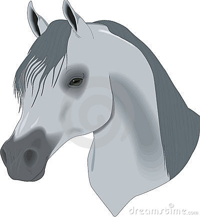 Beautiful drawing, head of horse