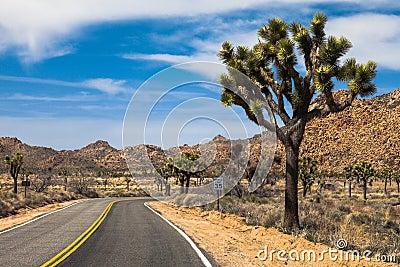 Beautiful drive through the Mojave Desert