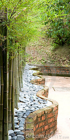 Beautiful dwarf bamboo