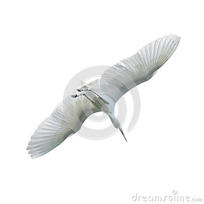 Beautiful white bird flying - photo#20