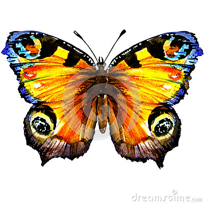 Free Beautiful European Peacock Butterfly With Open Wings, Top View, Isolated, Watercolor Illustration On White Royalty Free Stock Photo - 87892335