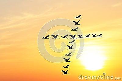 Beautiful evening sky & birds forming holy cross