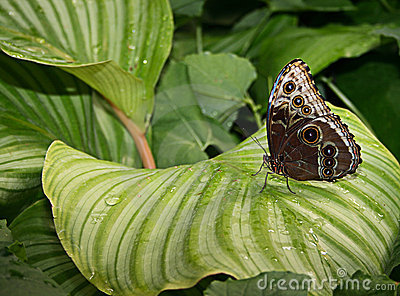 Beautiful exotic butterfly