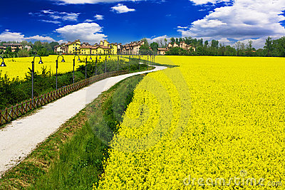 Beautiful Fairytale country and yellow rape flower