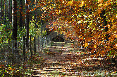 Beautiful fall in forest