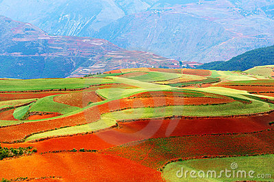 Beautiful fields landscapes