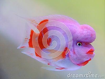 http://thumbs.dreamstime.com/x/beautiful-fish-13316116.jpg