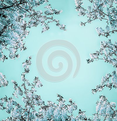 Free Beautiful Floral Background With Blue Blossom On Light Turquoise, Frame. Royalty Free Stock Images - 116535429