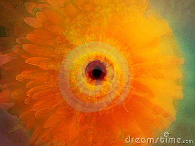 Beautiful Flower Abstract