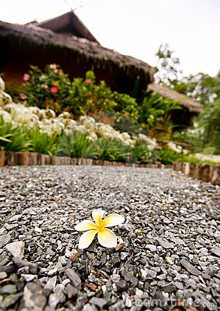 Beautiful flower on alley with bungalow