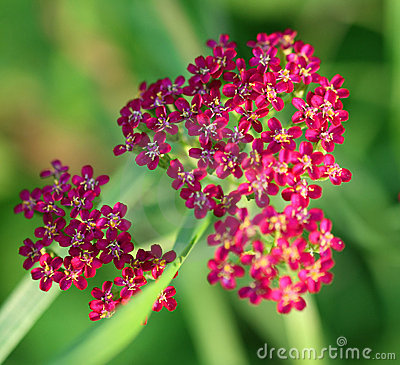 Beautiful flower on a background of a grass