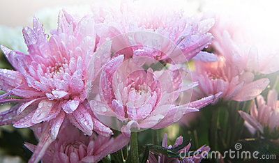 Beautiful flower with fresh water dew and morning