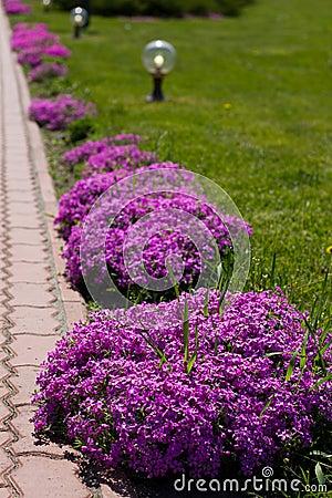 Beautiful flowers  on city park