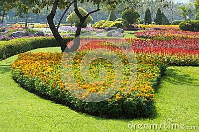 Beautiful flowers in park