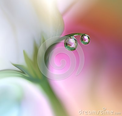Free Beautiful Flowers Reflected In The Water,artistic Concept.Tranquil Abstract Closeup Art Photography.Floral Fantasy Design. Royalty Free Stock Images - 103002969