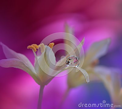 Free Beautiful Flowers Reflected In The Water,artistic Concept.Tranquil Abstract Closeup Art Photography.Floral Fantasy Design. Stock Photo - 112764310