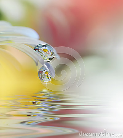 Free Beautiful Flowers Reflected In The Water, Spa Concept.Tranquil Abstract Closeup Art Photography.Floral Fantasy Design. Royalty Free Stock Photo - 97094805