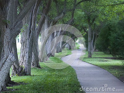 Beautiful Foggy Tree Lined Walking Path On Foggy M