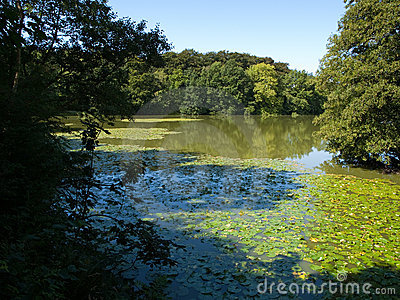 Beautiful forest green lush lake background
