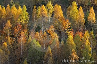 Beautiful forest scenery and autumn foliage