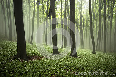 Beautiful forest in spring with fog, green plants and flowers