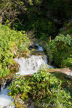 Beautiful  forest and waterfall in the  Kazakhstan