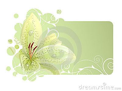 Beautiful frame with white lily