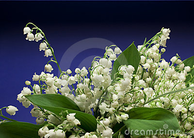Beautiful fresh Lily-of-the-valley flowers