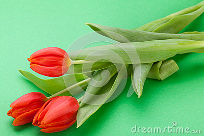 Beautiful fresh red tulips for a loved one