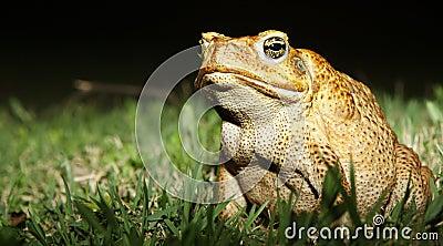 Beautiful Frog with Amazing Yellow Eyes