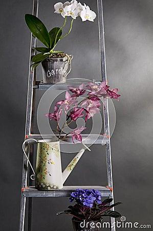 Beautiful garden flowers on metal stepladder