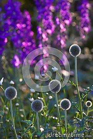 Beautiful garden a summer morning