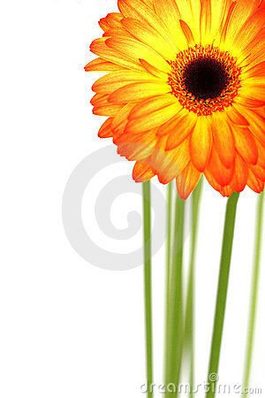 Free Beautiful Gerberas Stock Photos - 14074713