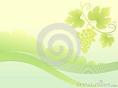 Beautiful golden grape vine background.
