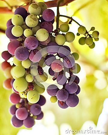 Beautiful grape brunch