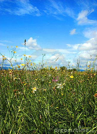 Beautiful green field full of different flowers