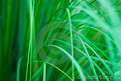 Beautiful green grassy abstract background