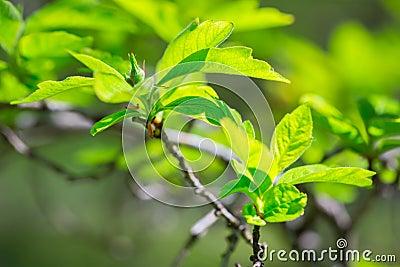 Beautiful green tree leaves