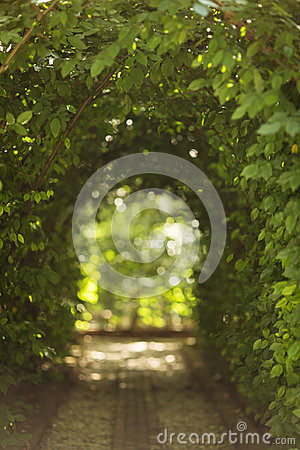 Free Beautiful Green Tunel With Light In Background And Rocks Alley Royalty Free Stock Photography - 97667317