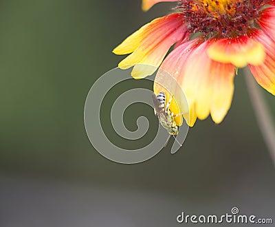 Beautiful green wasp on flower petal Stock Photo