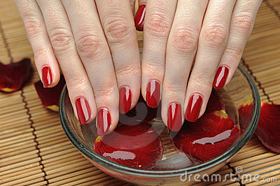 Beautiful hand with nail red manicure and petals