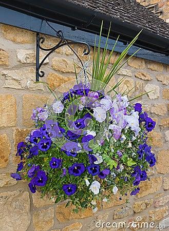 Free Beautiful Hanging Basket Of Blue And Purple Pansies Stock Image - 55227501