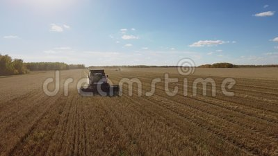 Beautiful harvest aerial view with harvester combine on wheat field. Beautiful harvest aerial view by quadcopter with harvester combine on the farm wheat field stock video