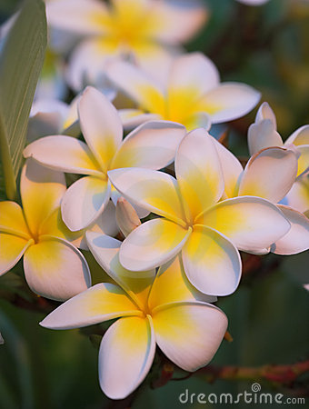 Beautiful Hawaiian flowers