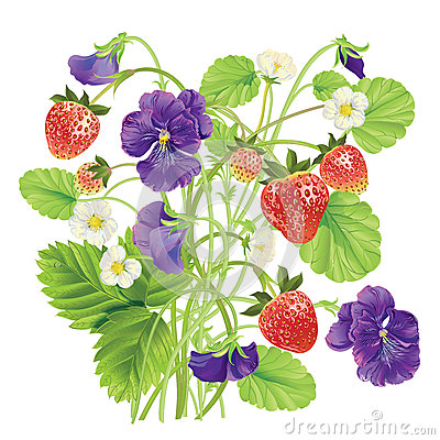 Beautiful heartsease . vector illustration of a realistic Vector Illustration