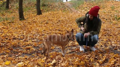 Young woman feeding cute dog in autumn park stock video