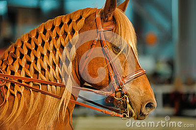 Beautiful horse with a mane