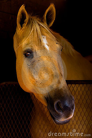 Beautiful Horse watching from Barn Stall.